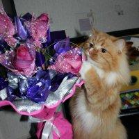 аромат цветов :: Julia