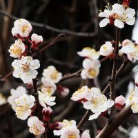 Весна пришла :: Владимир Оберемок