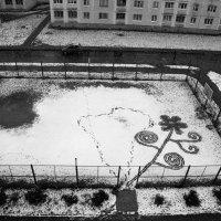 Первый снег :: Наталья Тривайлова