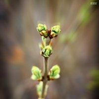 Весна :: Ананий Костоян