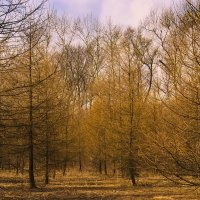 Весна в Кусково :: Наталья Лакомова