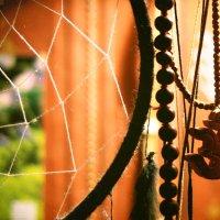 Домашняя паутина :: Alёna L.