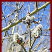 Весна) :: Валерий Стогов