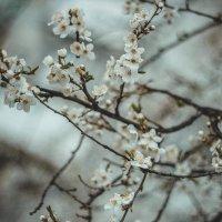 Весна... :: Юлия Пенькова