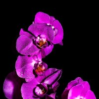 орхидея :: Дмитрий Алексеев