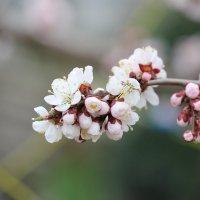 Ноты весны :: Руслан Грицунь