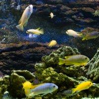 Fish :: Алексей Балацкий