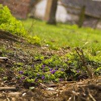 Весна пришла :: Андрей Федорук
