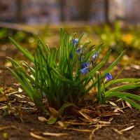 Весна пришла... :: Сергей Афанасьев