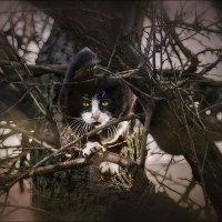 Охотник...следит за моими птичками... :: Елена Elena