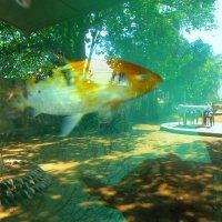 Призраки в иллюзорном мире: из жизни рыб. :: Ирина Сивовол