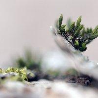 Весна на яблоне :: Евгений Барзенков