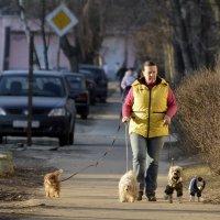 Дама с собачками :: Фома Антонов