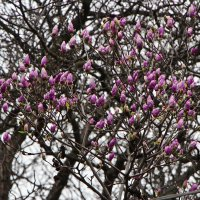 весна уже близко :: Анастасия Матвиец