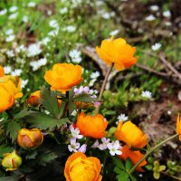 лесные  цветочки :: Александр