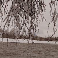 царство замороженных веток :: Кристина Воробьева