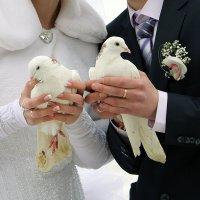 голуби :: Анна Бушуева
