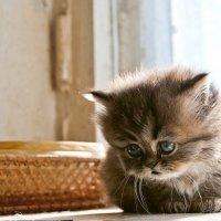 про котенка :: анатолий
