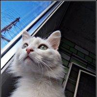Котишка по имени Моська :: Лариса Коломиец