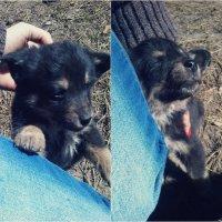 little cutie :: Ирина К