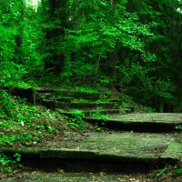 Утро в лесу :: Павел Дамарад