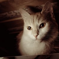 кто живет под кроватью... :: Андрей Кронберг