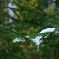 Белая птица зимы :: Валерий Талашов