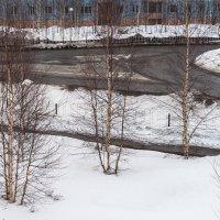 Куропатки в городе. :: Анатолий Бахтин