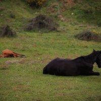 Horses morning :: Никита Рубцов