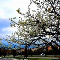 Самарканд в цвету! :: Михаил Столяров
