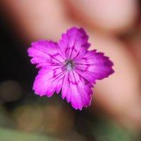 цветок :: Артем Громов