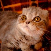 kitten :: Диана Серембаева