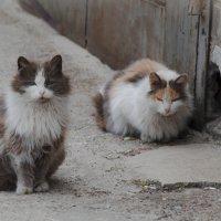 Коты :: Олька Н