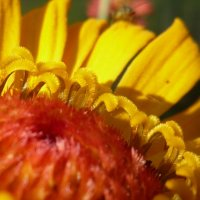 цвет лета :: Елизавета Темкова