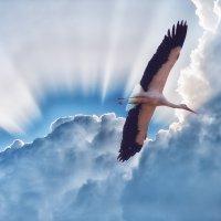 Мирное небо :: Анатолий Тимофеев