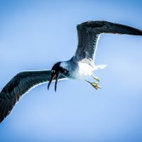Чайка :: SteFFun Glenton