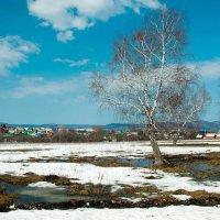 Тает снег :: Любовь Потеряхина