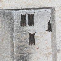 летучие мыши в подземелье старого форта. о. Элефант. Индия. :: maikl falkon
