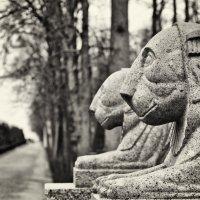 Взгляд в вечность.. :: Елизавета Вавилова