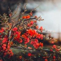 Цветут сады... :: Владимир Хижко
