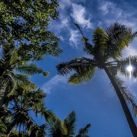 солнце.тропики. :: Александр