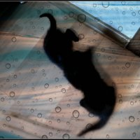 Жили были два кота - Восемь лапок, два хвоста! :: Ольга Кривых