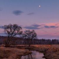 В тихом течении... :: Roman Lunin