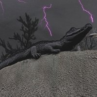 Крокодил солнце в небе проглотил. :: владимир