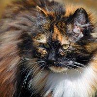 Наша сторожевая кошка -) :: Марина Шубина