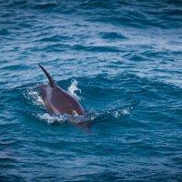Дельфин :: SteFFun Glenton