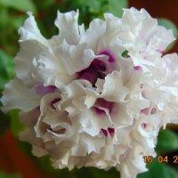 Цветок, пятуния. :: Vladikom