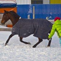 Люди, кони... :: Александр Павленко