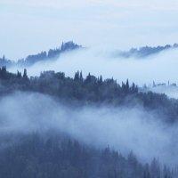 Туман :: Ксения Зиборова