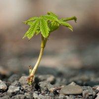 Маленькая пальмочка :: Анастасия Демида